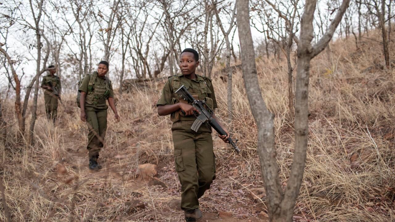 Au Zimbabwe, des unités 100% féminines en première ligne de la lutte anti-braconnage
