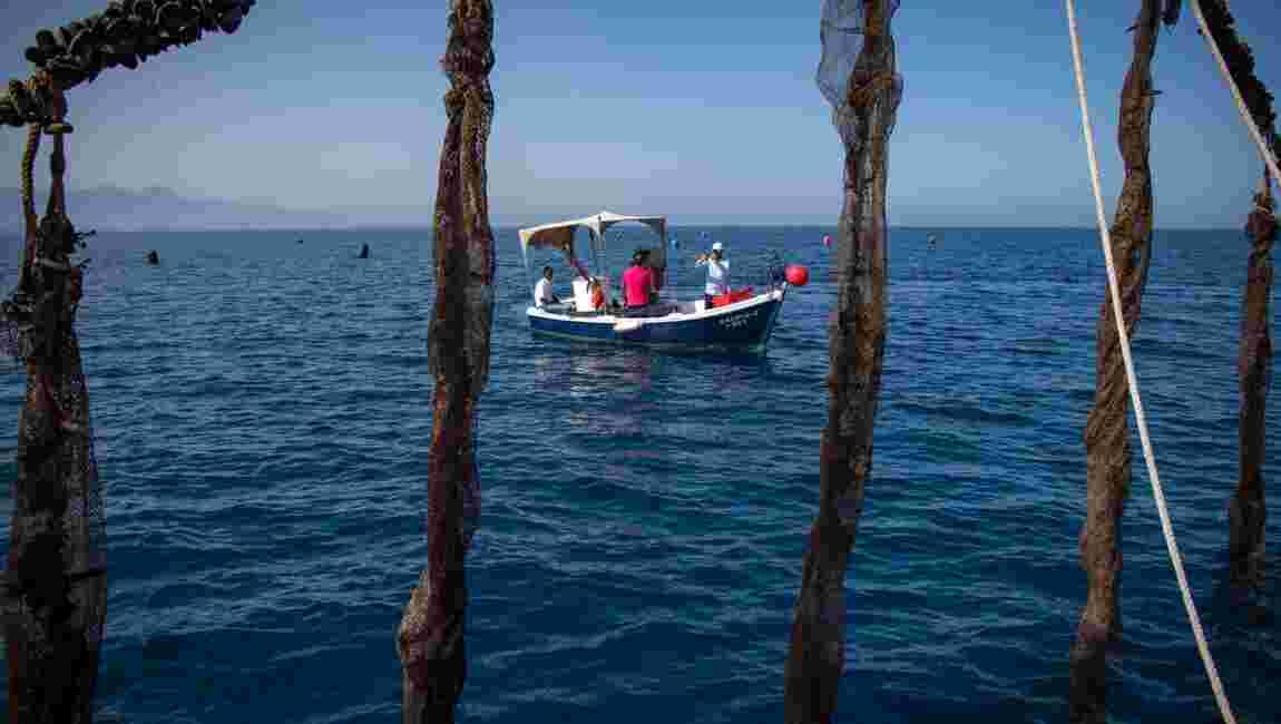 L'aquaculture, seul horizon des petits pêcheurs marocains en Mediterranée