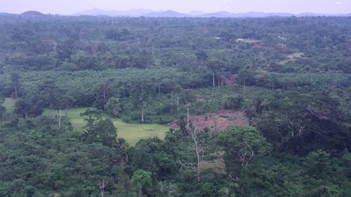 Côte d'Ivoire : un inventaire des forêts pour un plan de reboisement