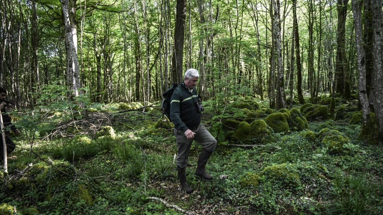 Un onzième parc national dans les forêts de feuillus de Champagne et Bourgogne
