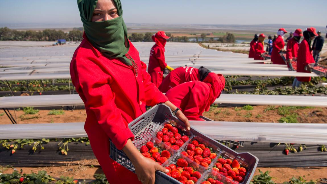 Agriculture: comment nourrir une Afrique qui se réchauffe?