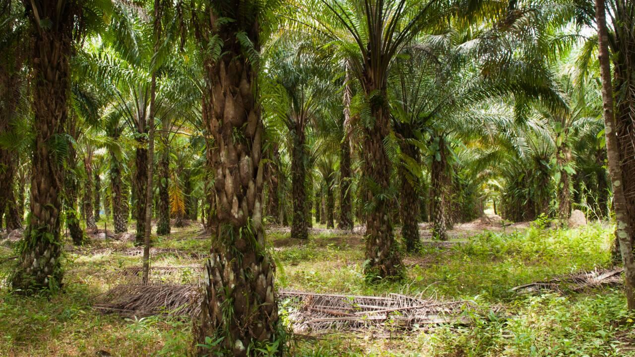 """Chanee : """"Sauver la forêt de Bornéo, ça ne veut rien dire, il faut être plus concret"""""""