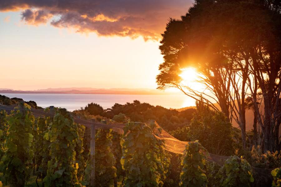 Le golfe de Hauraki vu depuis les vignes du Batch Winery