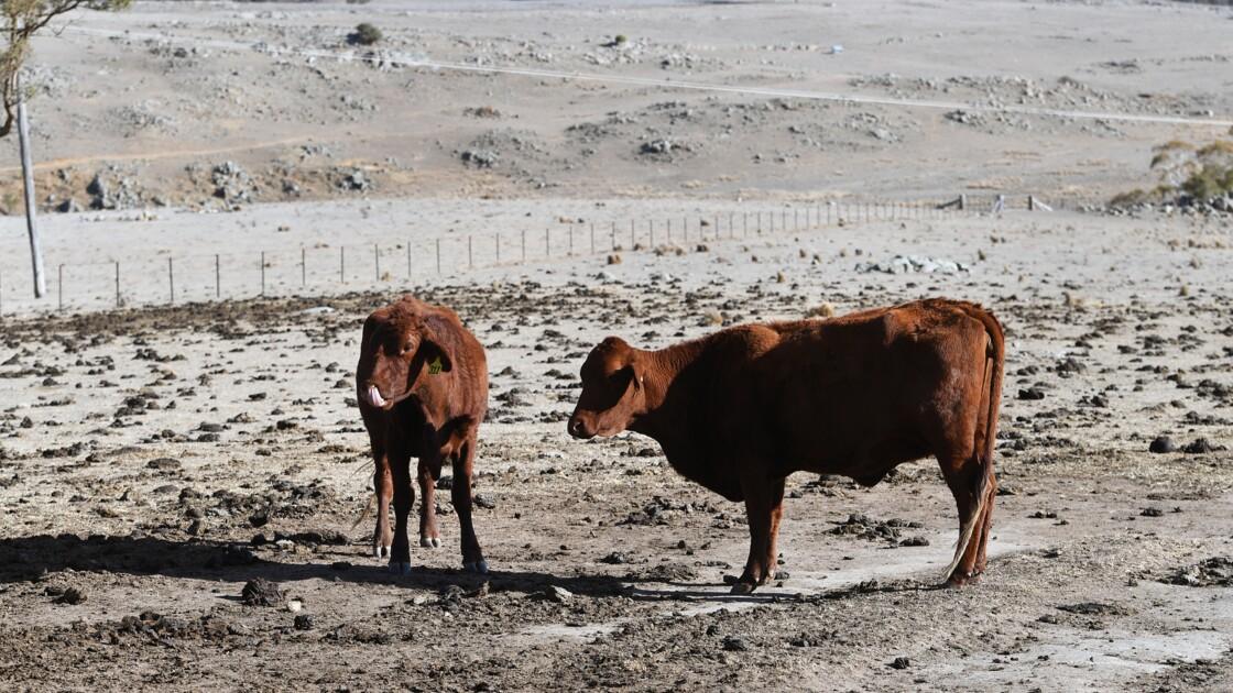 L'Australie annonce d'importantes aides financières contre la sécheresse