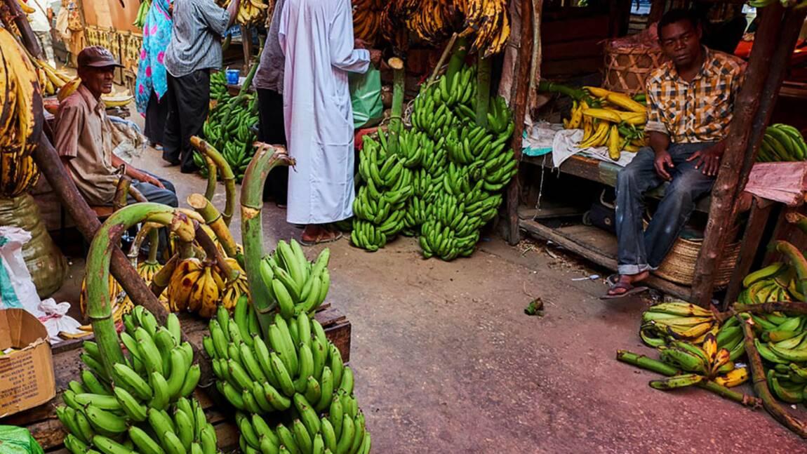 Zanzibar : les 5 coups de cœur de notre reporter