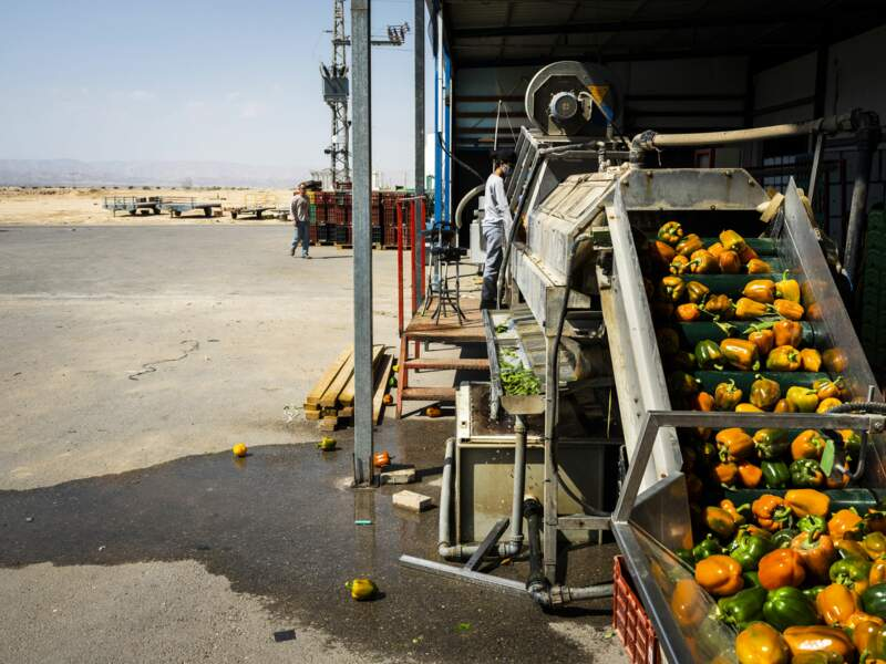 Traitement des poivrons