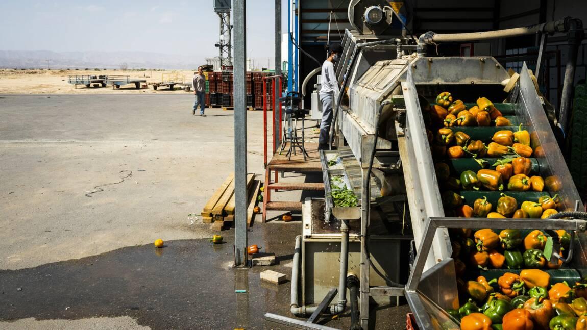 Le désert du Néguev, une région à la pointe de l'innovation