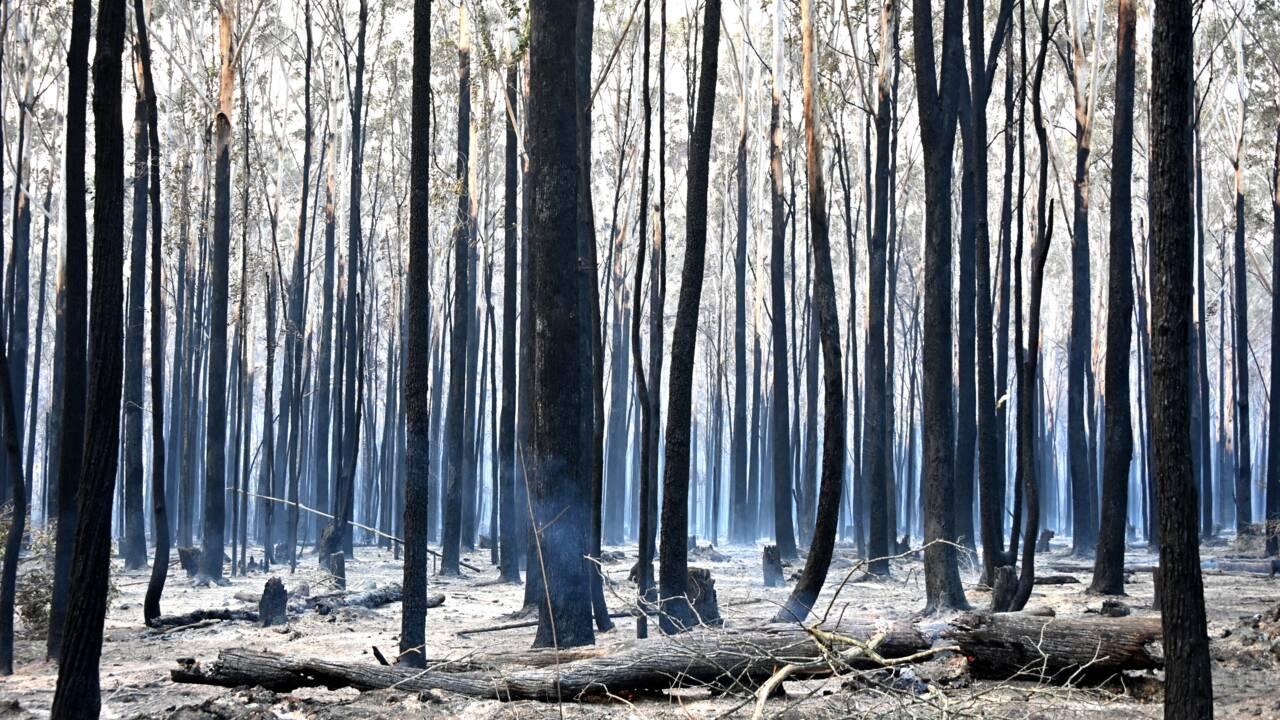 Incendies en Australie: les pompiers redoutent une aggravation de la situation