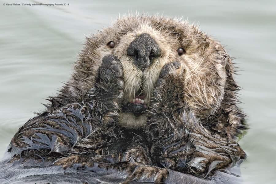 Oh my... Loutre de mer, Seward, Alaska (prix du public)