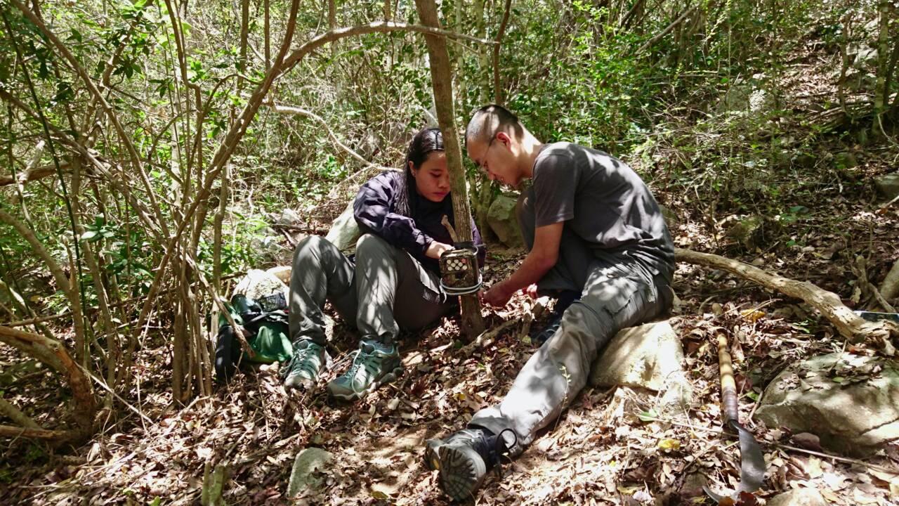 Une espèce de cerf-souris que l'on croyait disparue redécouverte au Vietnam