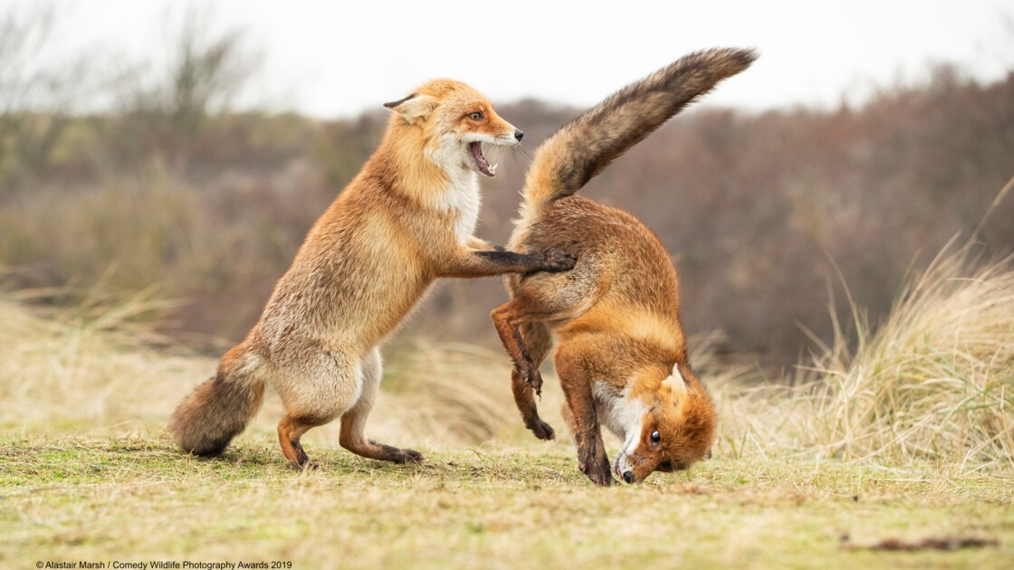 Les photos d'animaux les plus drôles primées aux Comedy Wildlife Photography Awards 2019
