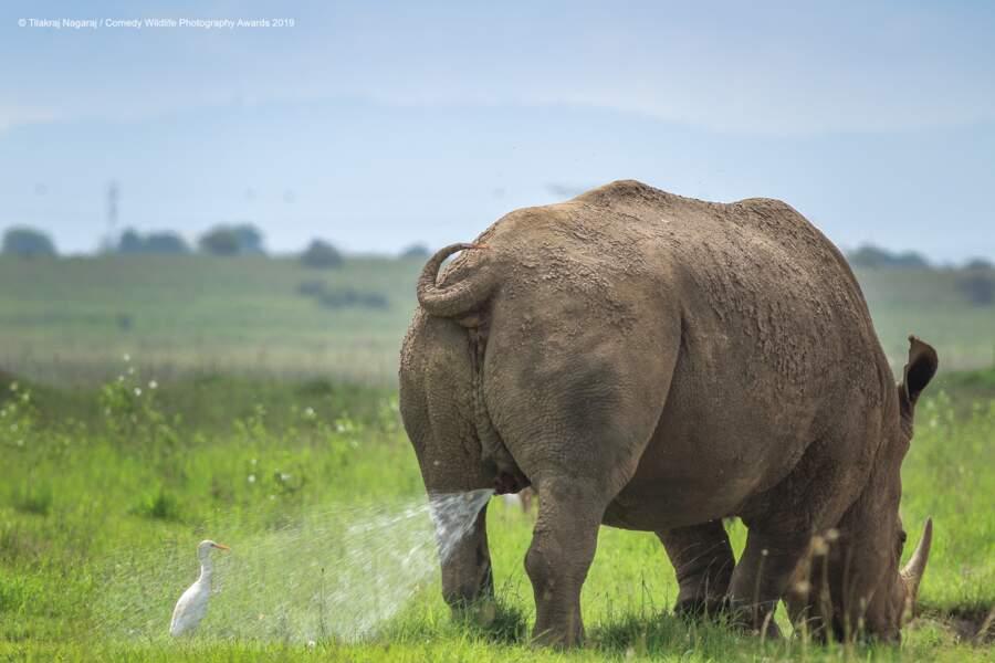 Aigrette VS rhinocéros blanc, parc national de Nairobi, Kenya (félicitations du jury)