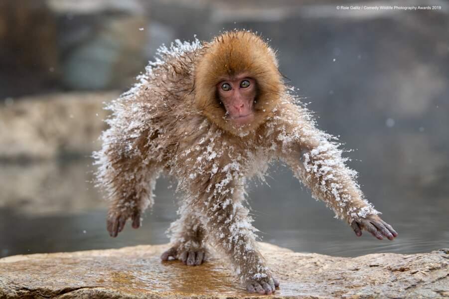 Macaque japonais (félicitations du jury)