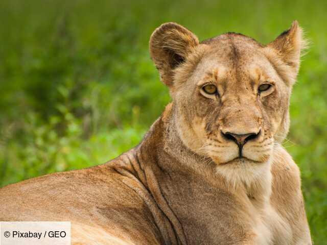 Parc zoologique : comment les soigneurs travaillent auprès d'animaux dangereux