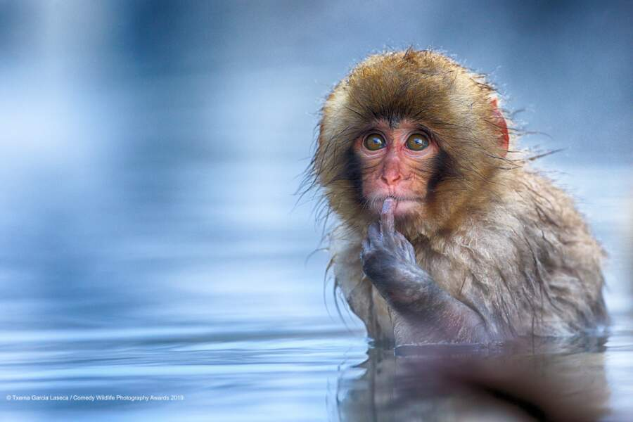 Macaque japonais dans ses pensées (félicitations du jury)