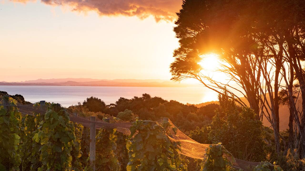 Nouvelle-Zélande : sur l'île de Waiheke, la dolce vita à l'aucklandaise