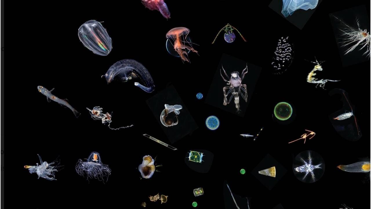 Biodiversité marine : des scientifiques s'inquiètent des effets du changement climatique sur le plancton