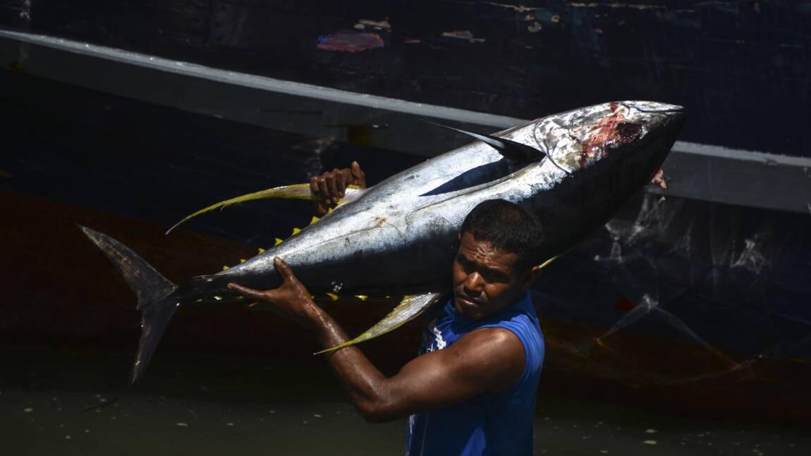 Reprise des négociations sur l'avenir du thon obèse en Atlantique