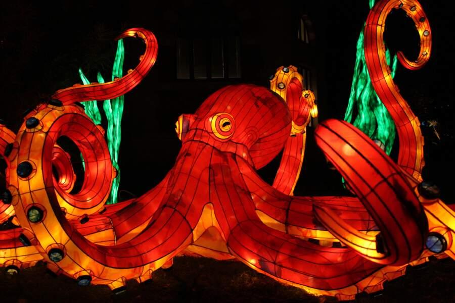 Tentacules flamboyants