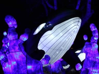 Une plongée lumineuse consacrée à l'océan au Jardin des Plantes de Paris