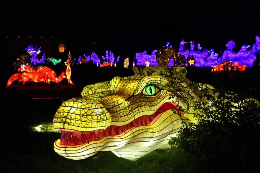 Face à face avec un crocodile géant
