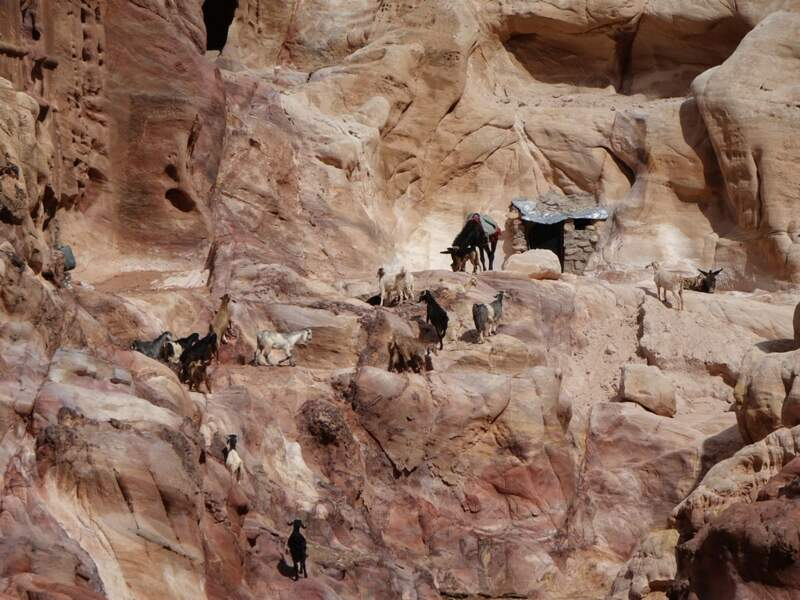 Troupeau sur le plateau le Moghar En-Nasara