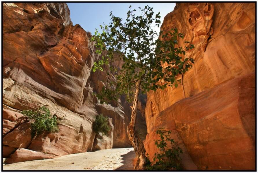 Bab Es-Siq, faille rocheuse naturelle de couleur ocre-rouge