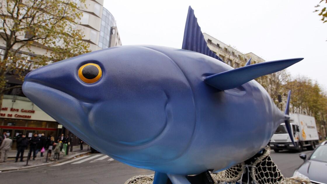 Un pas en avant pour protéger le thon obèse en Atlantique