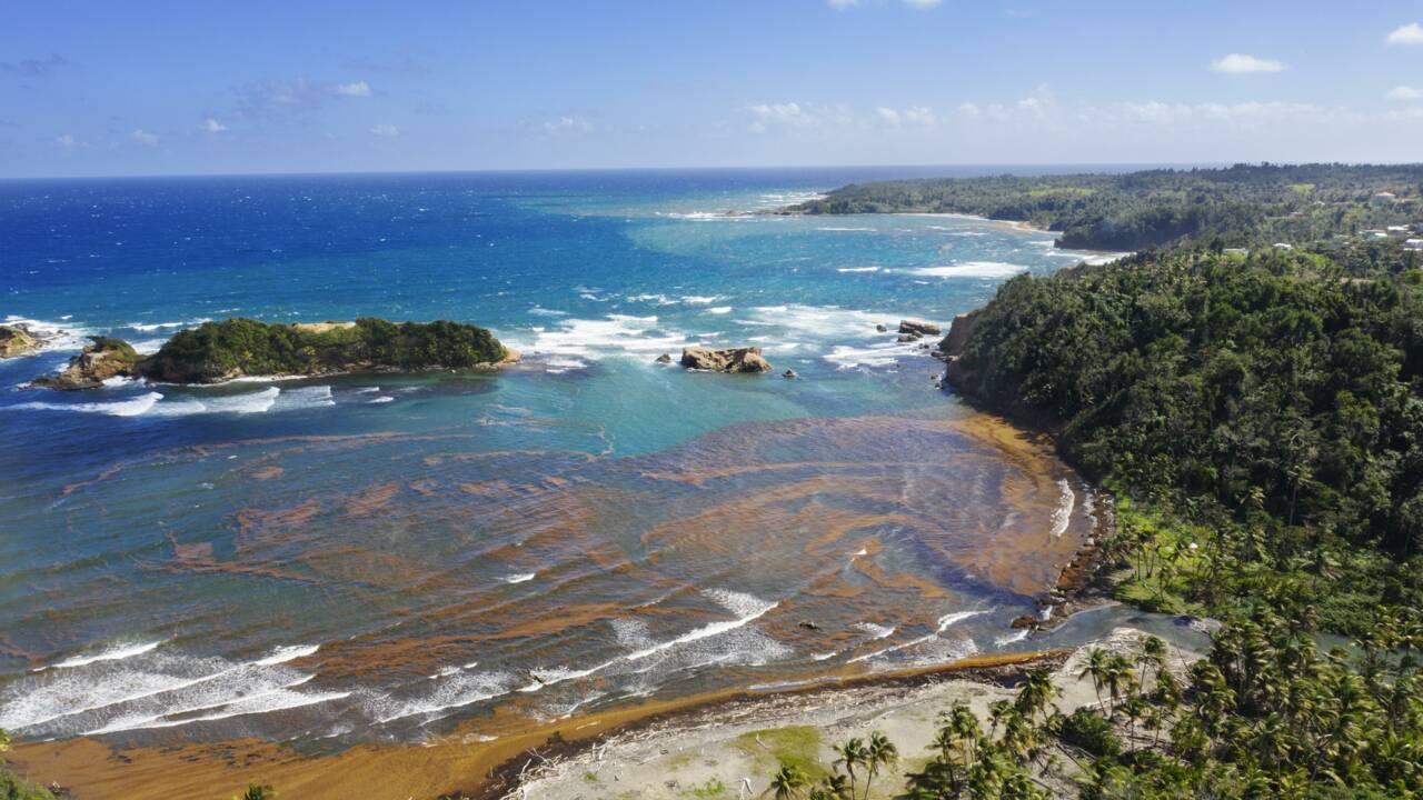 """Ile de la Dominique : un laboratoire de la """"résilience climatique"""""""