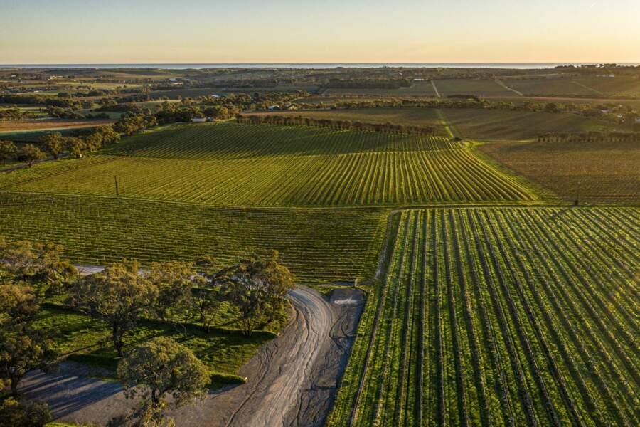 McLaren Vale, terre de vin