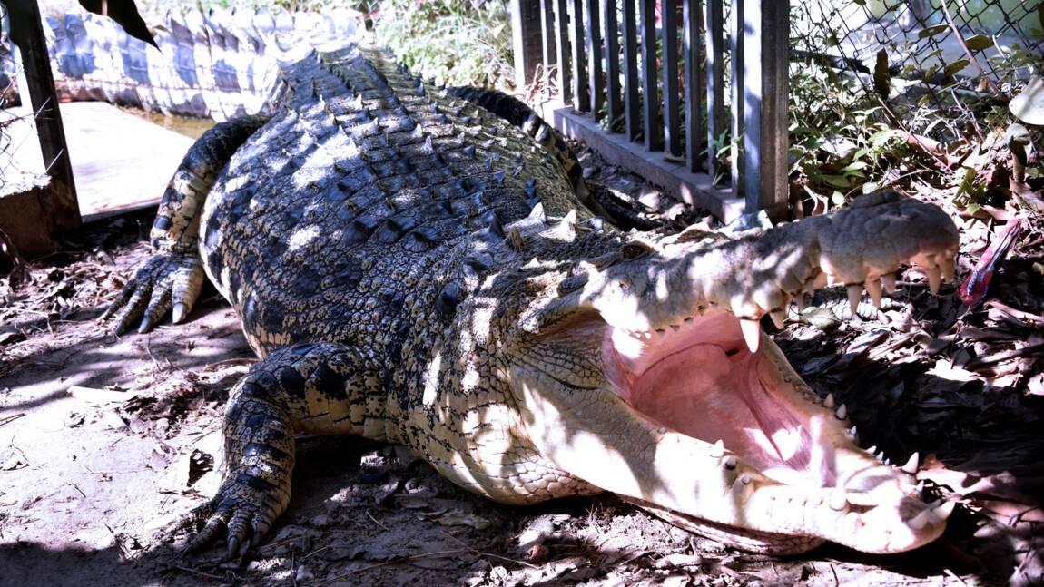 """Le Timor oriental désemparé face aux attaques des """"ancêtres"""" crocodiles"""