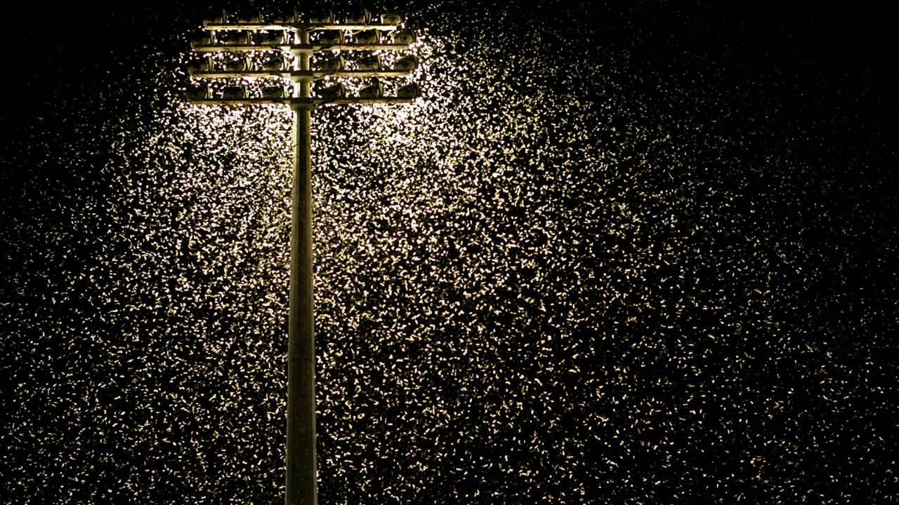 La pollution lumineuse jouerait un rôle crucial dans le déclin des insectes