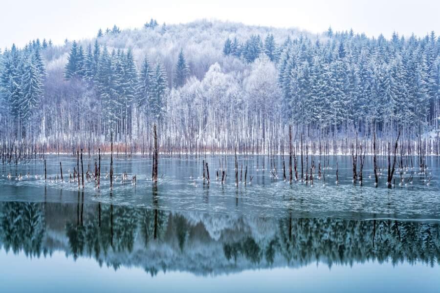 Cuejdel mon lac
