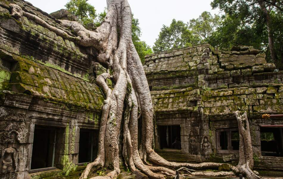 Le faux abandon du temple de Ta Prohm au Cambodge