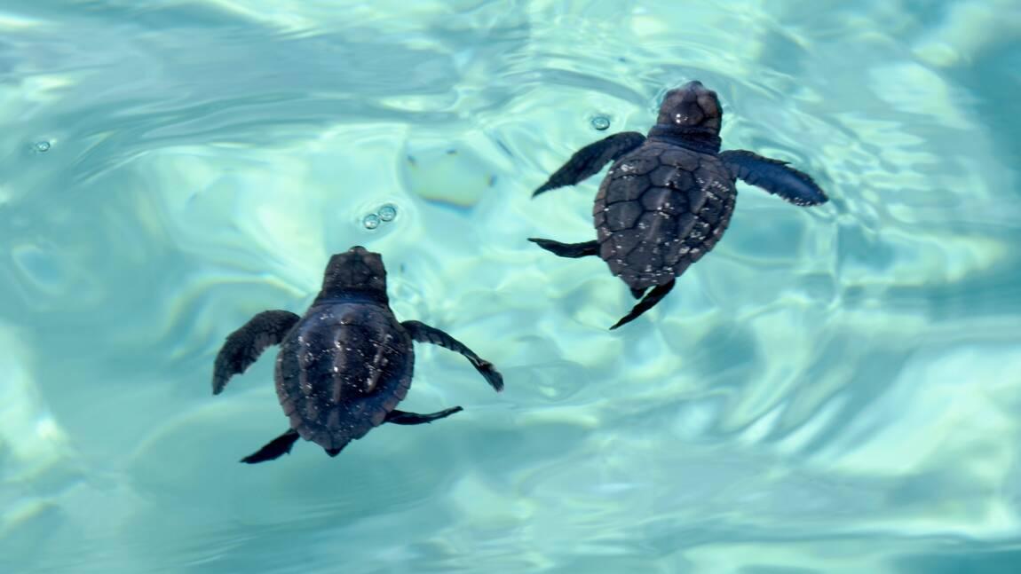Sur une île tunisienne, une initiative inédite pour aider à protéger les tortues