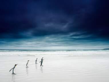 Iles Malouines : la beauté pure des cinquantièmes hurlants