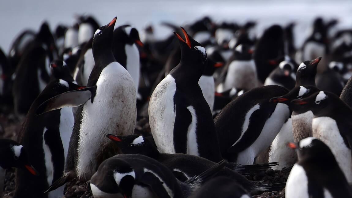 5 choses à savoir sur la faune en Antarctique