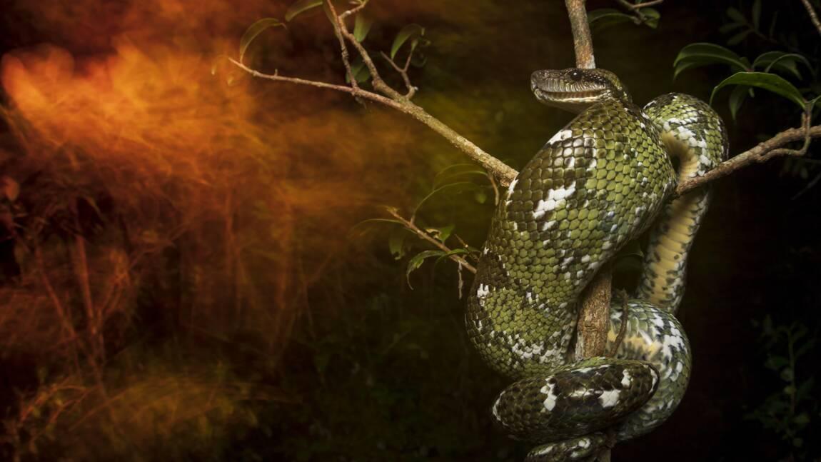 Les plus belles photos de faune et de flore récompensées par la British Ecological Society