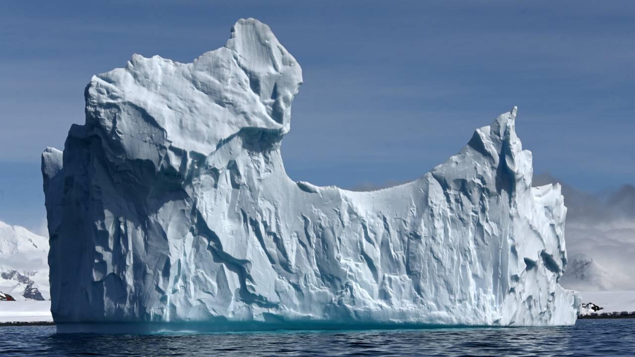 En Antarctique, les touristes en maillot de bain dans le jardin des manchots