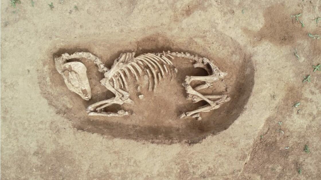 Archéologie : des tombes de chevaux découvertes dans le Calvados