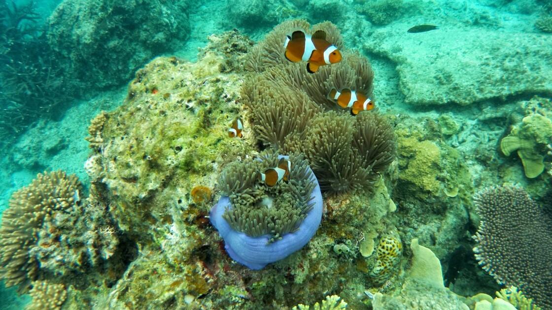 La Grande Barrière de corail pourrait être sauvée grâce à des haut-parleurs sous-marins