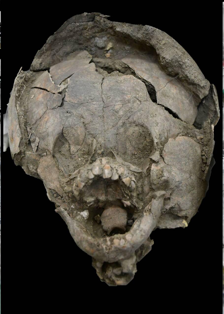 En Equateur, deux squelettes de bébés découverts portant les crânes d'autres enfants