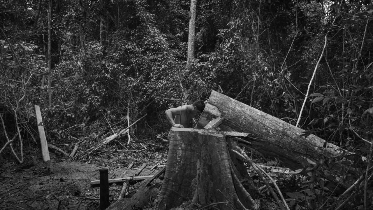 Amazonie : que dit cette photo de la déforestation aujourd'hui ? Les explications de Tommaso Protti
