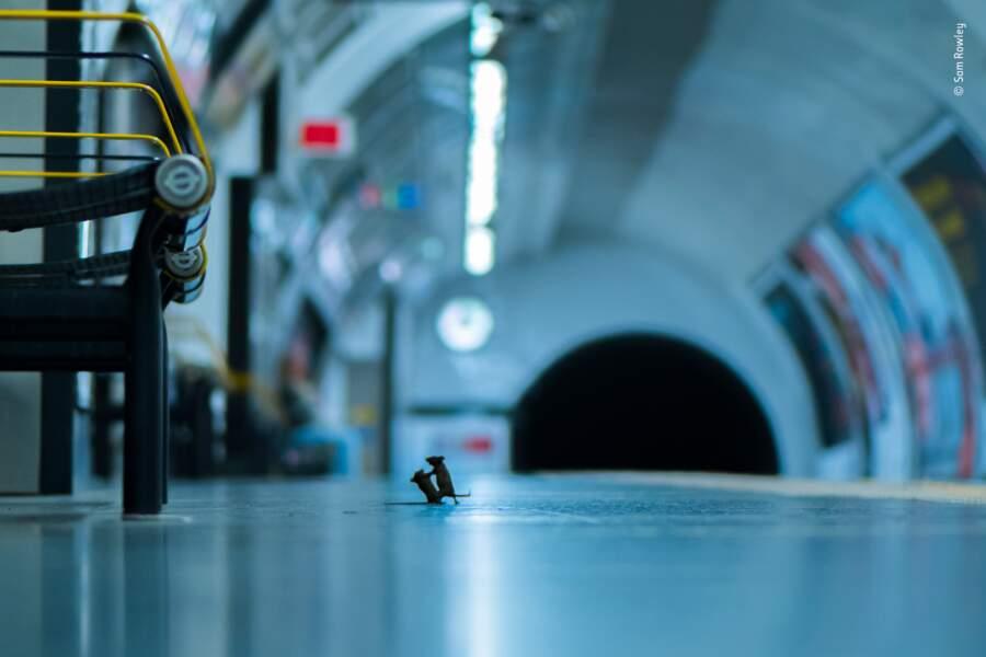 Querelle de métro