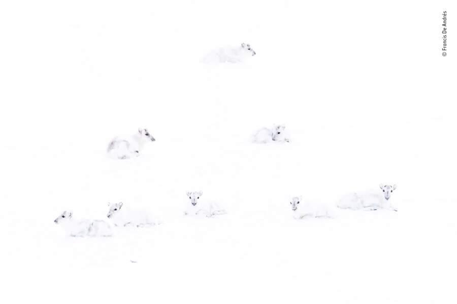 Cherchez le renne