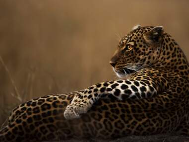Wildlife Photographer of the Year : votez pour votre photo préférée du concours