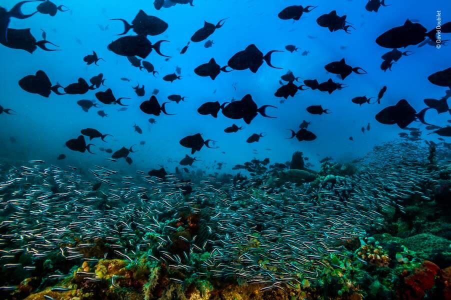 Les palpitations de l'océan