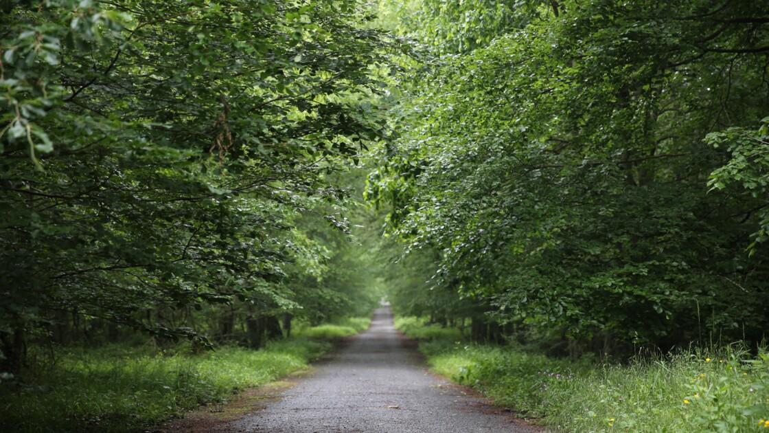 Une nouvelle forêt de 1350 hectares va bientôt voir le jour dans le Val-d'Oise