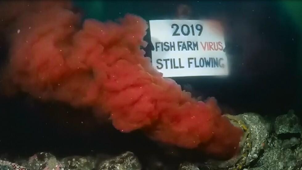 Près de Vancouver, un plongeur filme du sang contaminé déversé par un égout depuis 2 ans