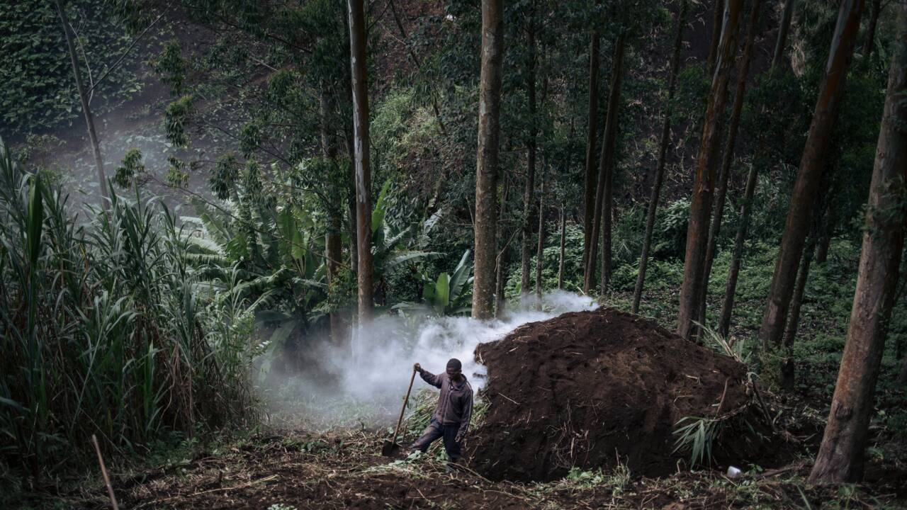 En RDC, le charbon de bois vital pour les foyers, mortel pour les forêts